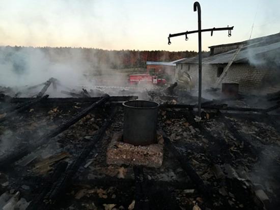 В Чувашии от огня спасли 100 коров