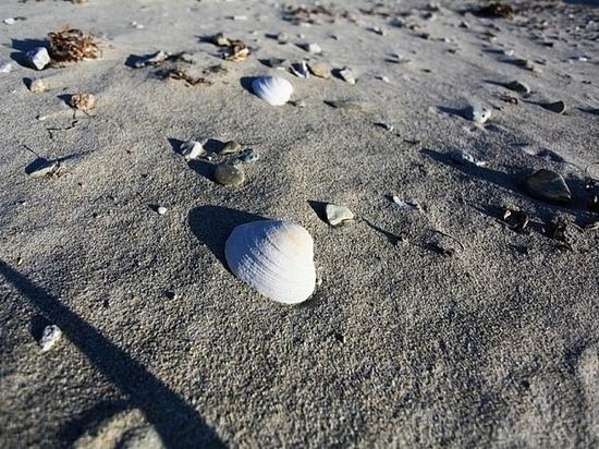 Изменилось количество безопасных для отдыха пляжей в Приморье