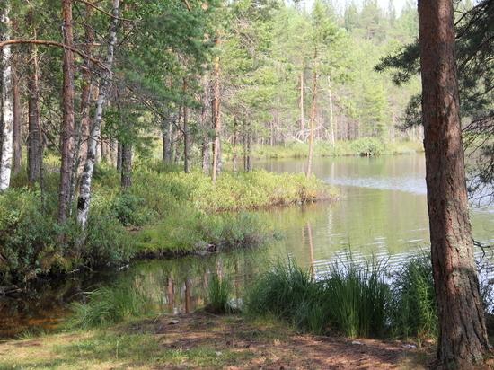 Региональные власти обеспокоены пожарами в лесах Вологодской области