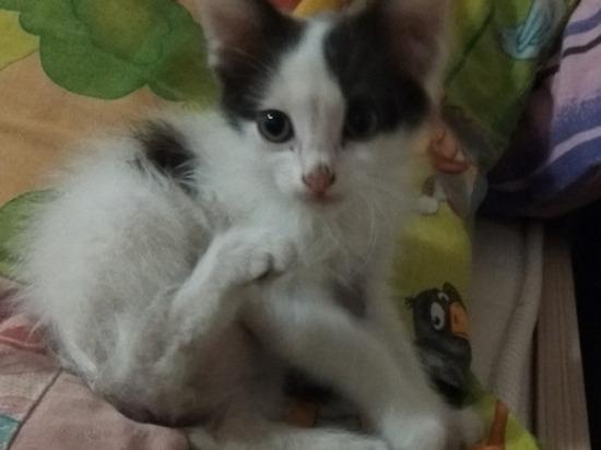 Подвергшаяся жестоким опытам кошка из Волгограда ищет новый дом