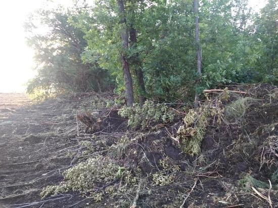 Вырубкой 20 гектаров заповедного леса в Костёнках заинтересовалась прокуратура