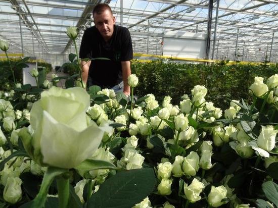 Мордовия собирается стать конкурентом Голландии в цветочном бизнесе