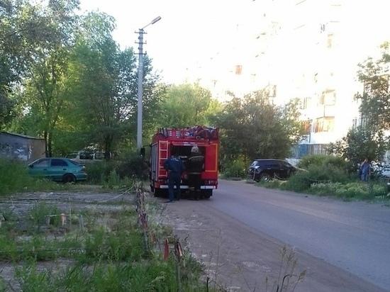 Вокруг тополей у роддома №6 в Омске разгорелся скандал из-за пуха