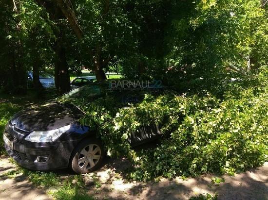 В Барнауле дерево упало на автомобиль, перегородив дорогу