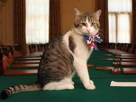 Кот английского премьера Ларри отказался переезжать сДаунинг-стрит