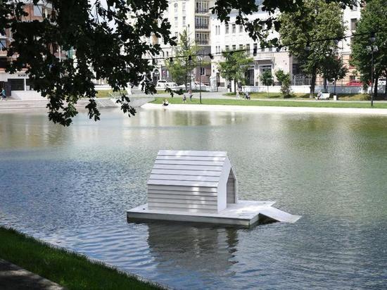 У лебедя, потерявшего подругу на казанском «Черном озере», еще есть время проявить знаменитую верность