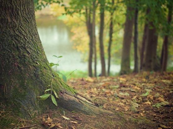 В Тамбовской области введено ограничение на отдых в лесах