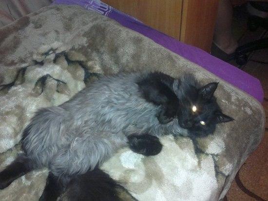 Московская чиновница прыгнула из окна вслед за умершим котом