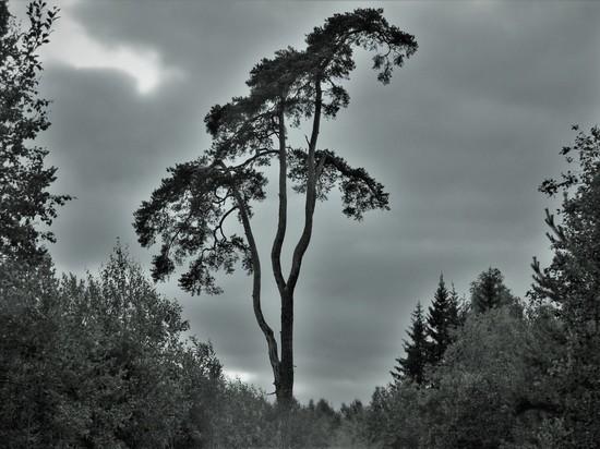 Власти Карелии просят спасти леса Валаама