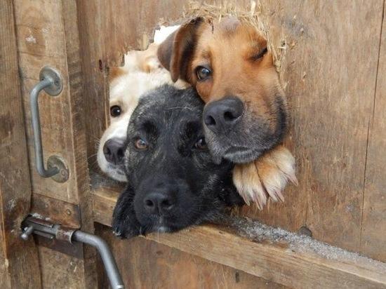 В Омске пройдет выставка бездомных животных «Потому что лапки»