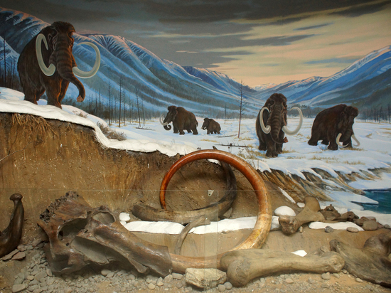 Иркутские музейщики достали череп, подстаканник и волосяные очки