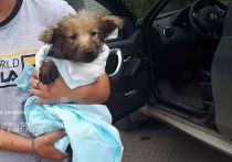 В Новосибирской области спасли щенка, завязшего в гудроне