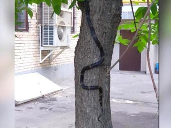Московские спасатели поймали на Ленинском проспекте 1,5-метровую змею