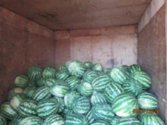 В Оренбуржье не разрешили завезти 24 тонны лука и арбузов из Казахстана и Кыргызстана