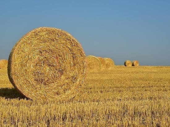 В Рассказовском районе сгорели пять тонн сена