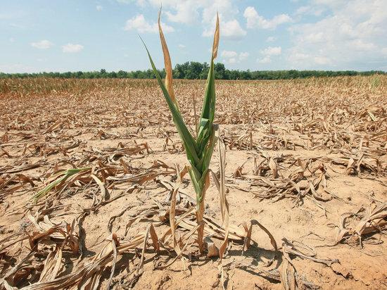 Из-за сильной жары в Астраханской области засуха и критическое положение дел