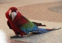 Омского циркового попугая, «сменившего пол», переименовали в Филипповну