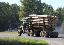 Ревизия по выделению лесных ресурсов пройдет на Вологодчине