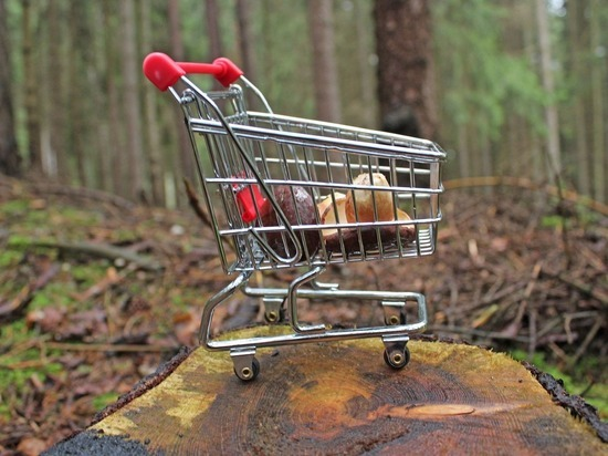 Роспотребнадзор разъяснил, какая тара не подходит для сбора грибов