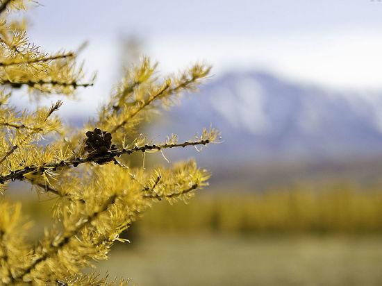 В Подмосковных лесах появится дерево, которого там никогда не было