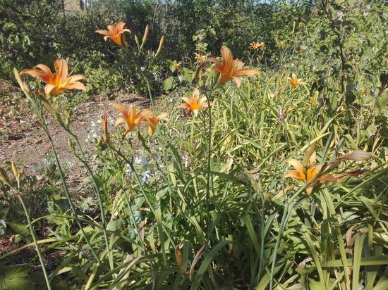 Цветовод рассказала, какие цветы хорошо переносят волгоградскую жару