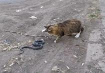 Астраханский кот схлестнулся со змеей
