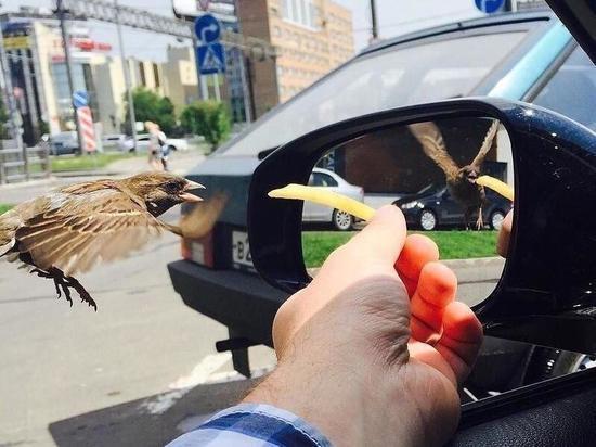 Чтобы понять, чем фотография необычна, следует приглядеться к крыльям