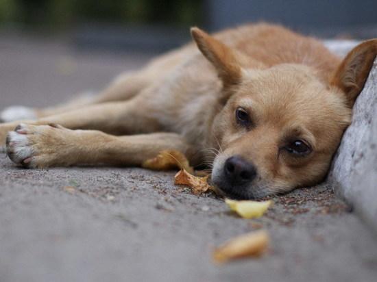 Оренбуржец оценил в100тыс.руб. попытку отравить его собаку