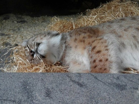 Питомцев ленинградского зоопарка перевели на диету