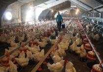 В Татарстане из-за птичьего гриппа отменили фестиваль «Скорлупино»