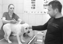 В Хабаровске подтверждено несколько случаев бешенства