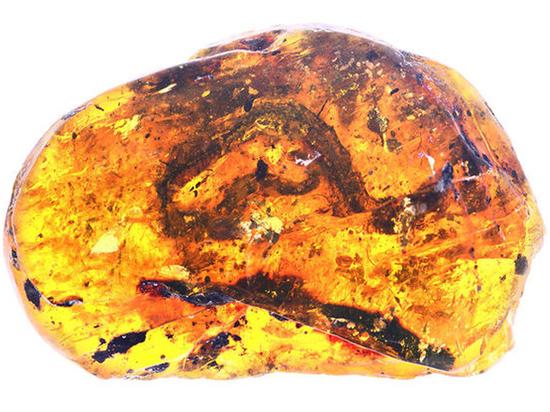 Древнейшего детеныша змеи обнаружили в янтаре