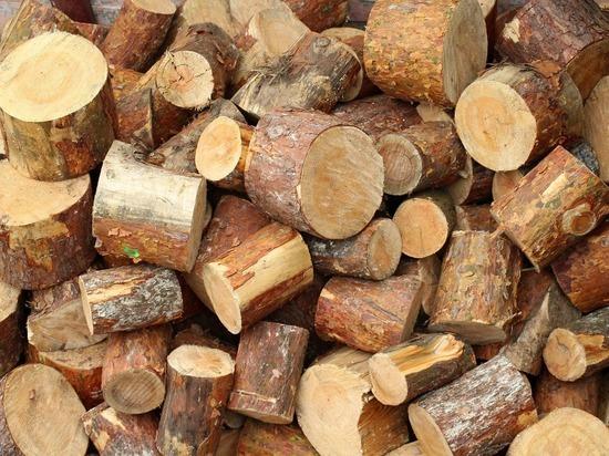 Бес попутал: томский губернатор ответил Михалкову, рассказавшему о «китайской угрозе» лесу