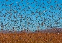 МЧС: в Оренбуржье в августе возможны нашествие саранчи, природные пожары и коммунальные аварии