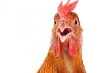 К Оренбургской области подступает птичий грипп