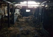 В случае со сгоревшей в Северодвинске конюшней подозревают умышленный поджог