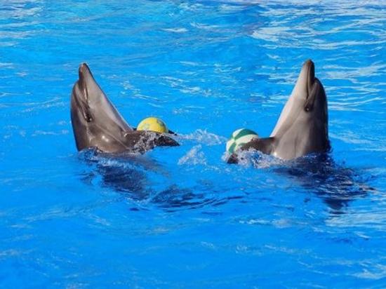 Улыбка Гуинплена: издевательства в дельфинариях обернулись серьезной проблемой