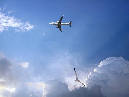 Пассажирский самолет после вылета в Москву столкнулся с птицами