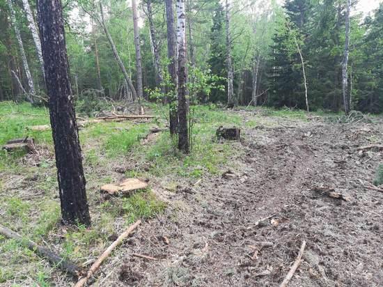 Опасный лесоповал: под Красноярском суд запретил рубить деревья