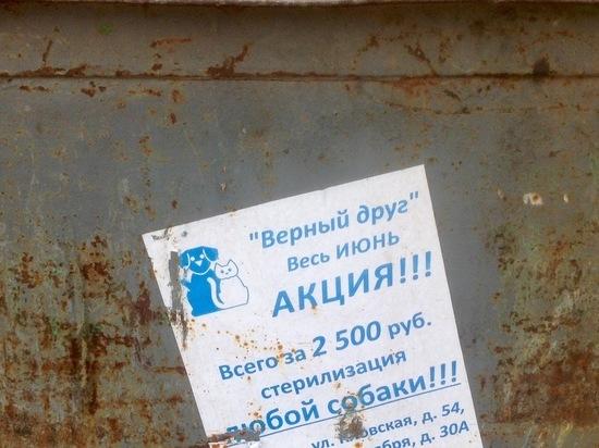 И власти, и горожане устраивают в Смоленске самые неожиданные акции