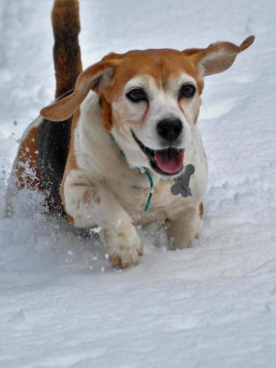 Собаки готовы на всё, чтобы утешить хозяина, показало научное исследование