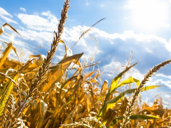 Из-за рекордной жары в Германии может подорожать сельхозпродукция