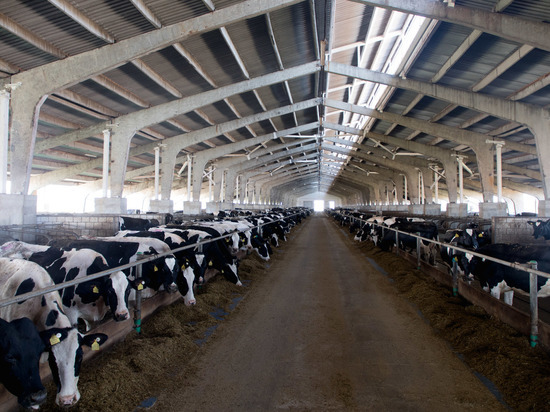 Андрей Бочаров поставил задачу увеличить процент самообеспечения региона молоком