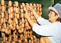 Жители Бурятии могут отслеживать безопасность продуктов животноводства с помощью смартфонов
