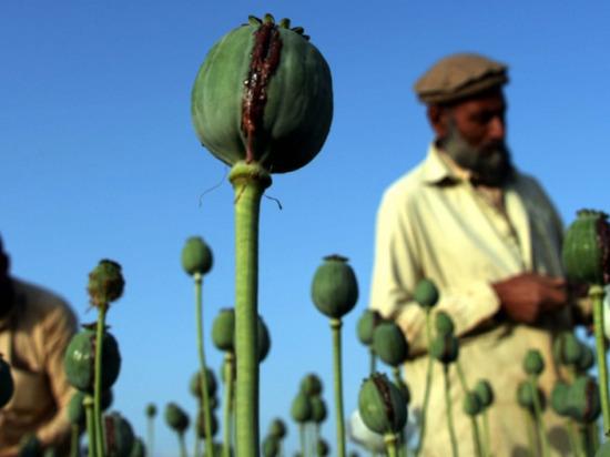 Поток афганских наркотиков растет, несмотря на присутствие американцев в этой стране