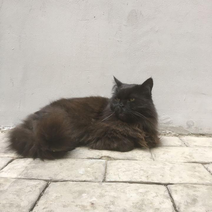 Похищенного из«Булгаковского дома» кота Бегемота подкинули кТеатру Моссовета