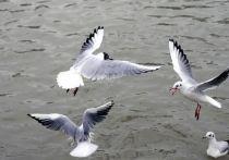 Стали известны причины гибели птиц в Якутии