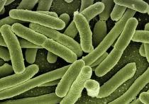 Спирт больше не убивает бактерий: медики пришли к неутешительному выводу