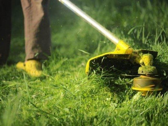 Сити-менеджер оказался недоволен покосом травы в Кирове