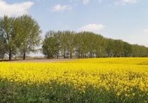 В Ржевском районе научат перерабатывать масличные культуры на корма